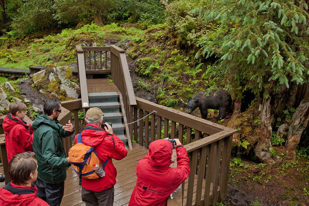 bear viewing in Wrangell AK